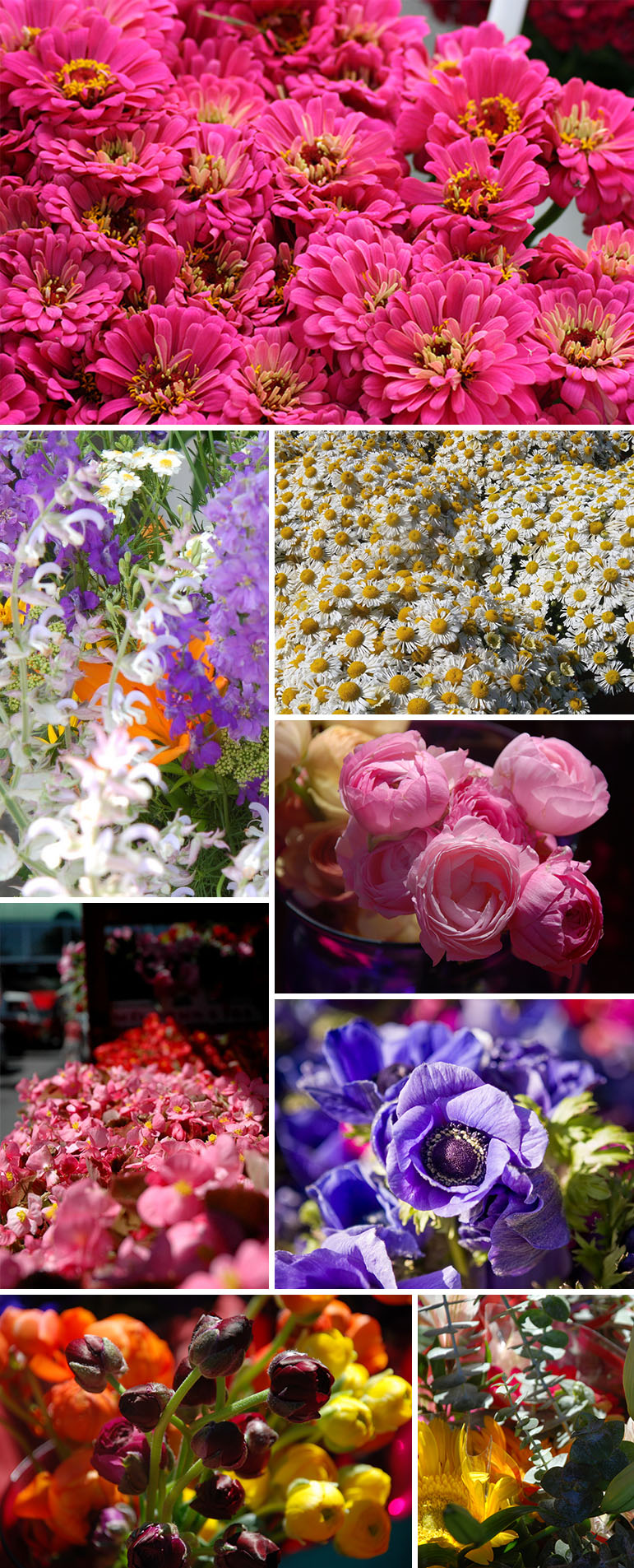 Farmersmarket_flowers